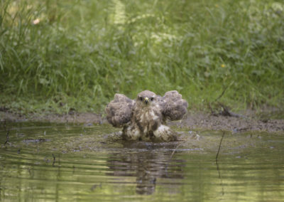 Buse variable_065